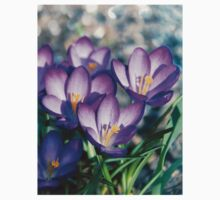 Crocus is the present of spring. Kids Clothes