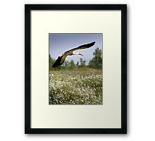 Flight Of The Stork Framed Print