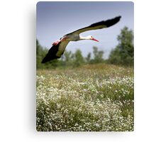 Flight Of The Stork Canvas Print