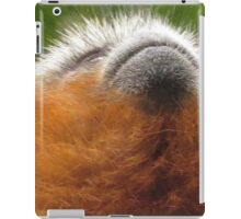 Red Titi Monkey Juvenile Looking Up iPad Case/Skin