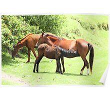 Horses on Farmland Poster