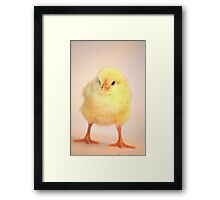 Traditional Easter Chick Framed Print