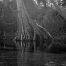 Tree by kailani carlson