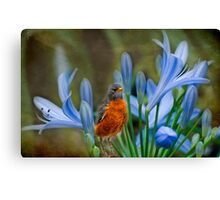 Robin in flowers Canvas Print
