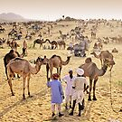 Pushkar, India #2 by Mauricio Abreu