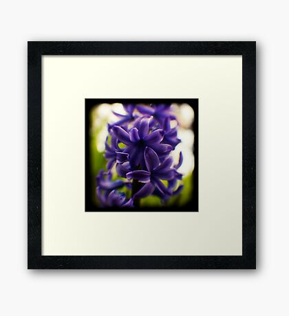 hyacinth TtV Framed Print