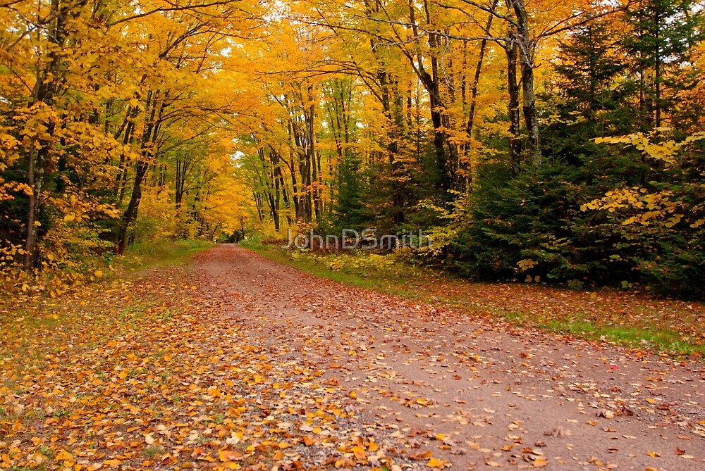 Yellow fall Driveway by JohnDSmith