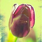 Absinthe Tulip by FlashGordon666