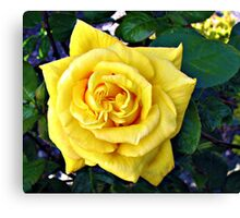 Golden Double Hearted Rose Canvas Print
