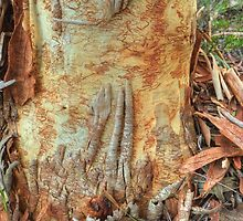 Scribbly Gum by Michael Matthews