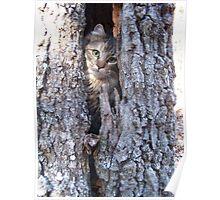 My cat rambo in tree. Poster