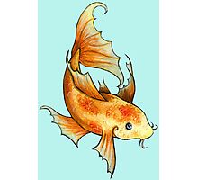 Gold and Red Koi Fish Photographic Print