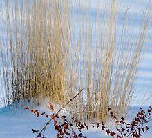 Winter Grass by kenspics