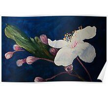 White Blossom Poster