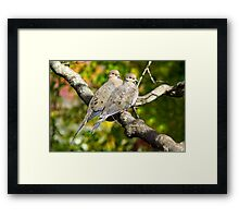 Sweethearts ~ A Pair of Doves Framed Print