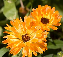 marigolds by Gracie Borgnet