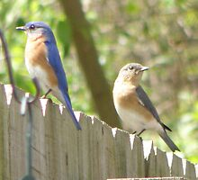 Days of our Bluebirds - Episode 5 by Luann Gingras