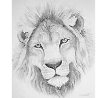 Lion's Head Photographic Print