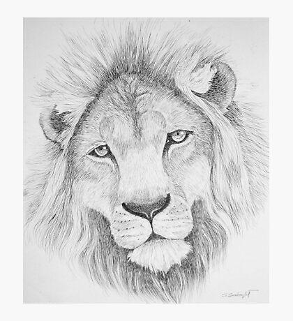 Lion's Head Photographic Print