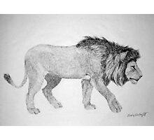 Lion #2 Photographic Print
