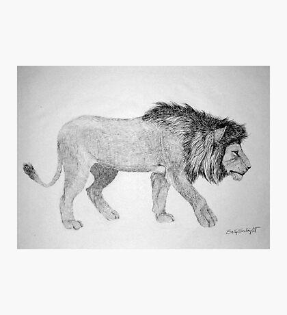 Lion #2 Photographic Print