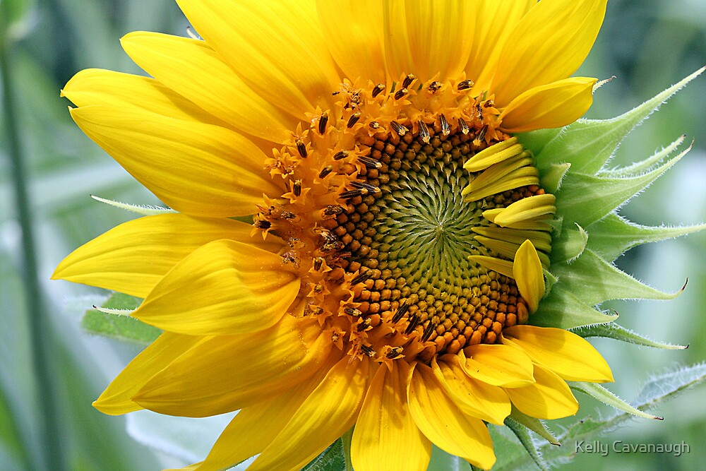 Sunny Day by Kelly Cavanaugh