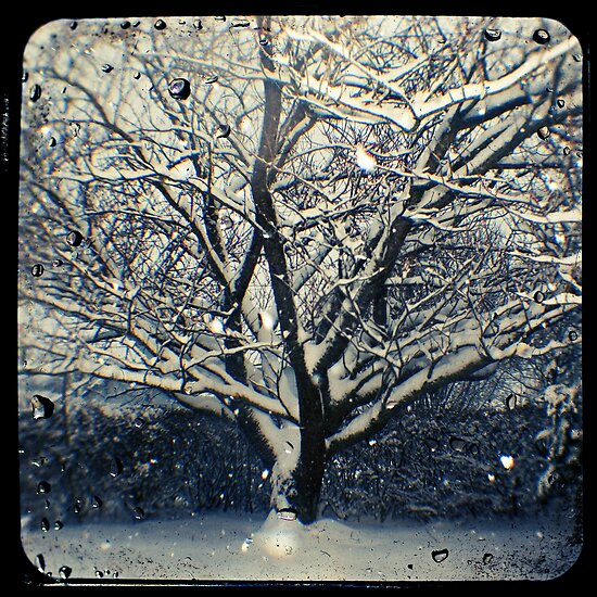 Winter Cherry Tree TtV  by Adam Graham