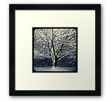 Winter Cherry Tree TtV  Framed Print