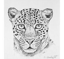 Leopard Head Photographic Print