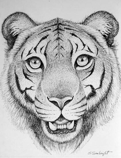 Tiger Head by sally seabright