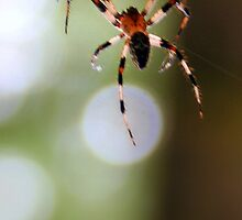 Silver Falls State Park- Spider by WaterInMotion