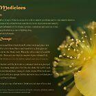 Herbs as Medicines- St John's Wort by cdwork
