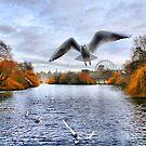 Seagull in Saint James Park by Philip James Filia