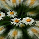 Mystic Daisies by sundawg7