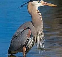 020109 Great Blue Heron by Marvin Collins