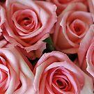Valentine by Karen E Camilleri