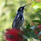 Little Birdy by Joy Watson