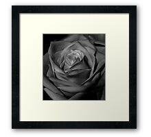 Rose in Black and White Framed Print