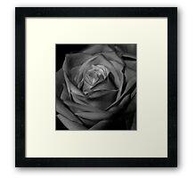 Rose in Black and White Framed Print