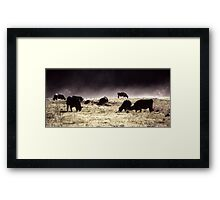 Morning Cows Framed Print