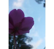 A flowers point of view Photographic Print