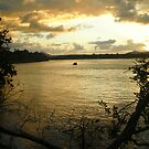 Noosa River  by Vee T