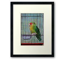 Bird in a Cage Framed Print