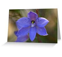 Dotted sun orchid .. Thelymitra ixioides Greeting Card