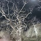 The Memory of Trees by Martilena