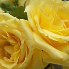 Yellow Roses by A.H. Thom