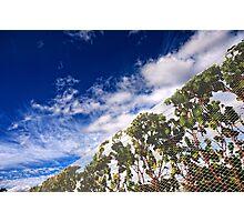 Vineyard perspective. Photographic Print