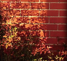 red wall and plants by 黃 黃