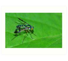 Dolichopodid Fly Art Print