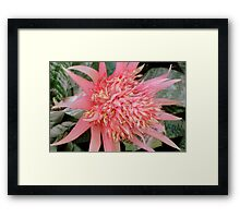 Pink Prongs ^ Framed Print